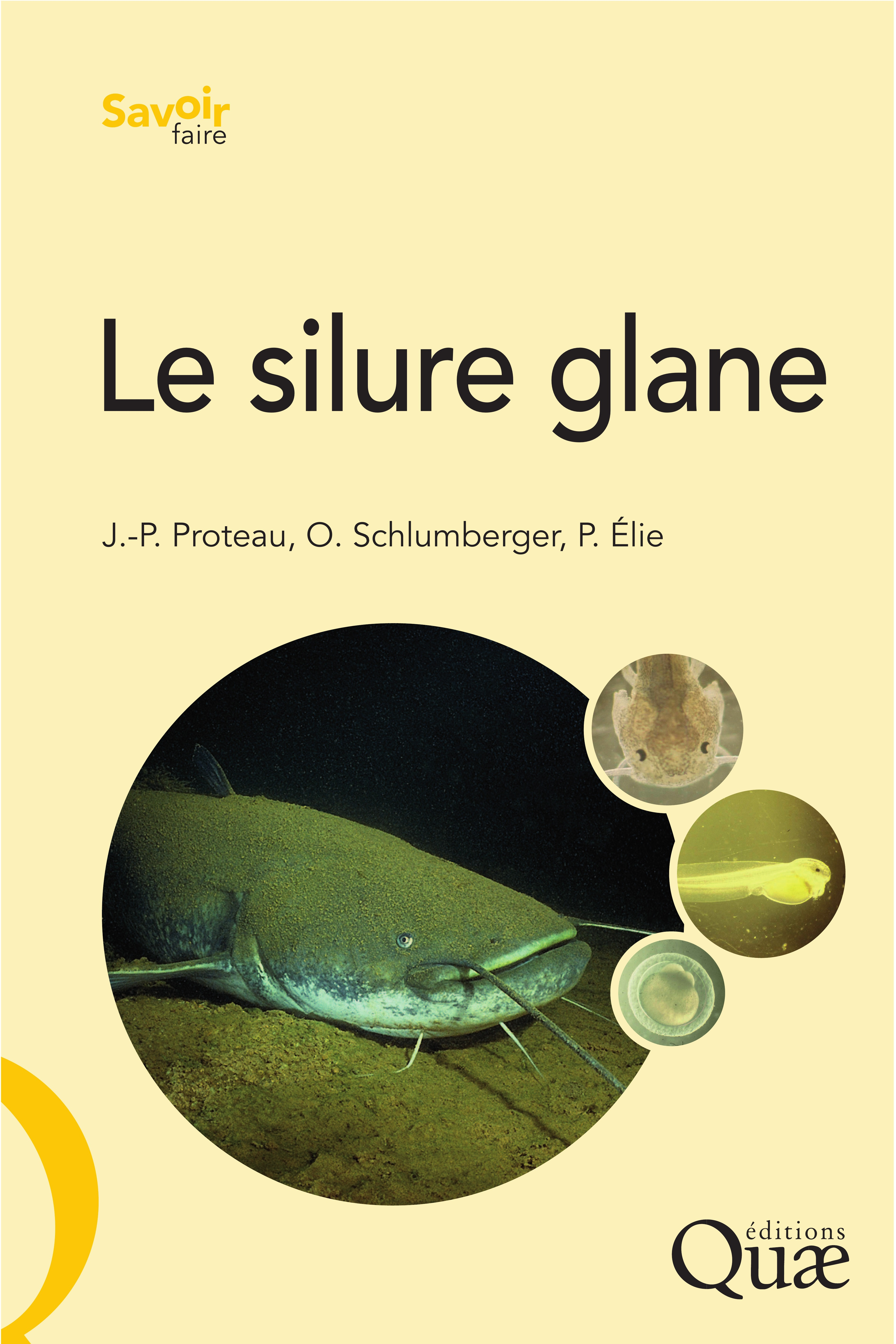Olivier Schlumberger Le silure glane