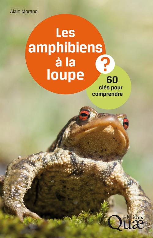 Alain Morand Les amphibiens à la loupe