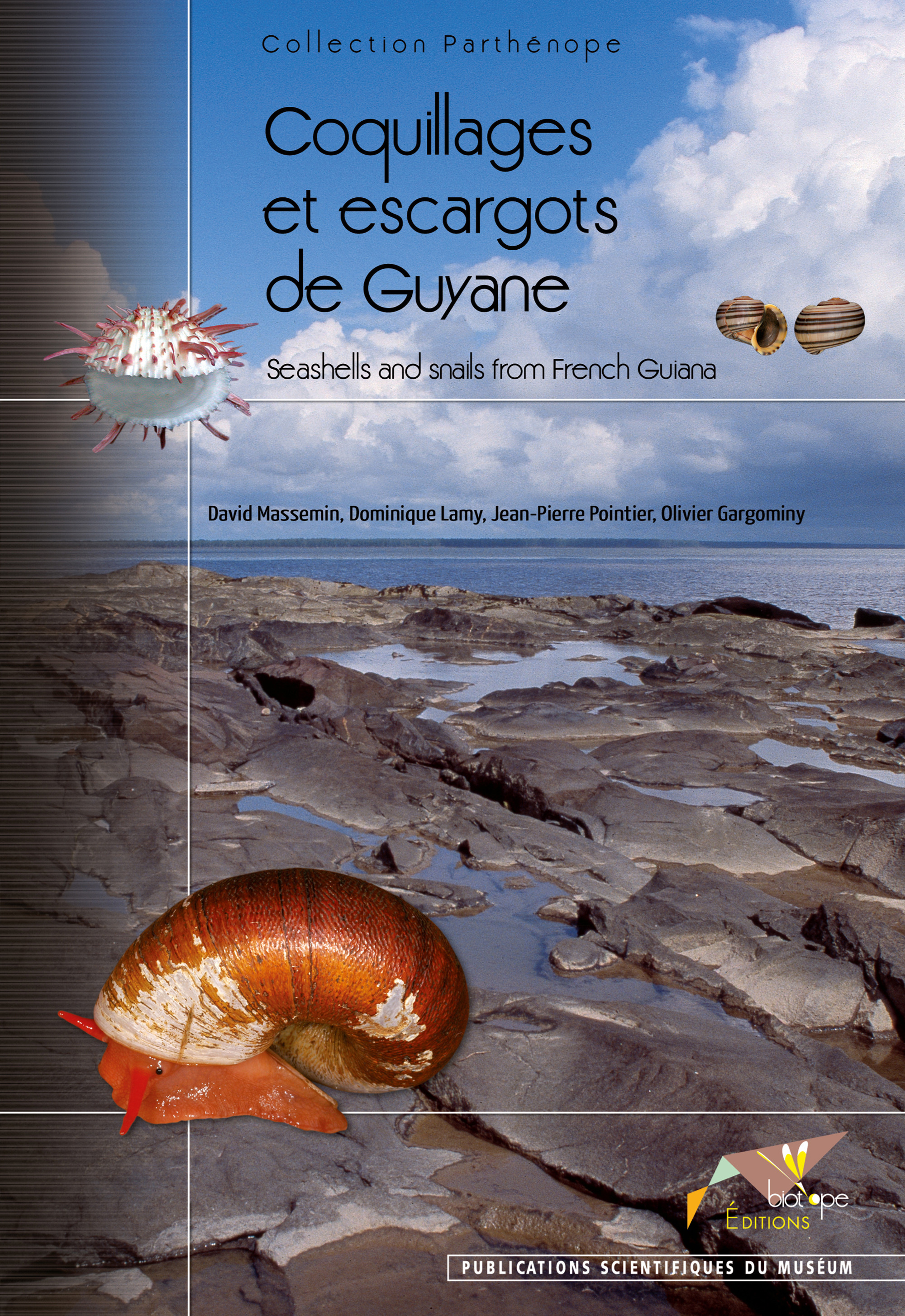 David Massemin Coquillages et escargots de Guyane