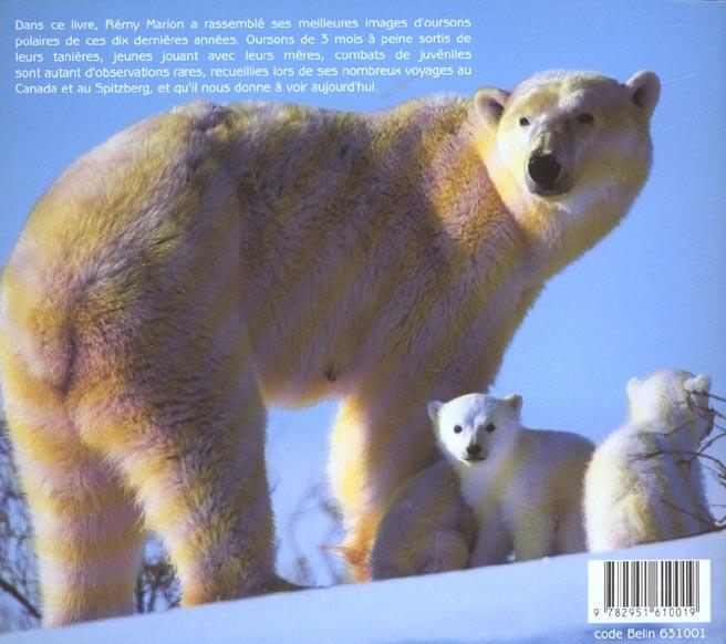 petit ours polaire