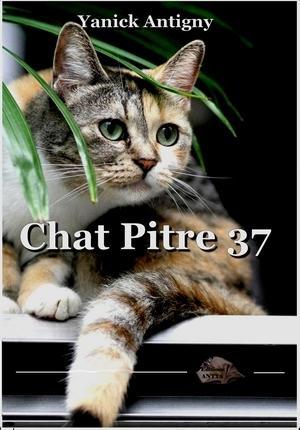 Chat pitre 37