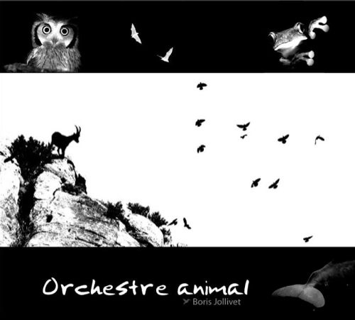 Orchestre animal