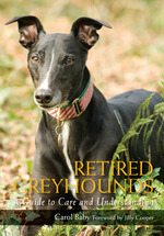Retired Greyhounds  - Cooper Jilly
