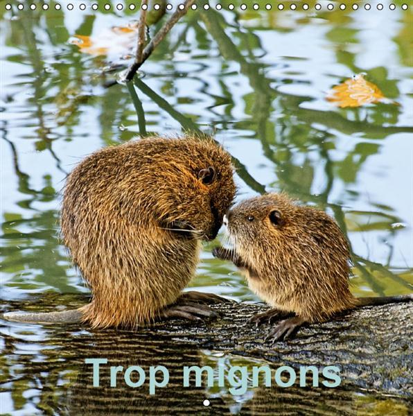 Trop mignons (Calendrier mural 2016 300 × 300 mm Square) ; petits et jeunes animaux trop mignons (Calendrier mensuel)