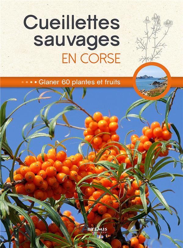 Cueillettes sauvages en Corse