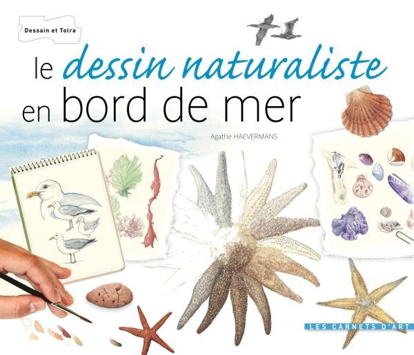 Le dessin naturaliste ; bords de mer