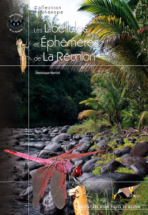 Les libéllules et éphémères de La Réunion