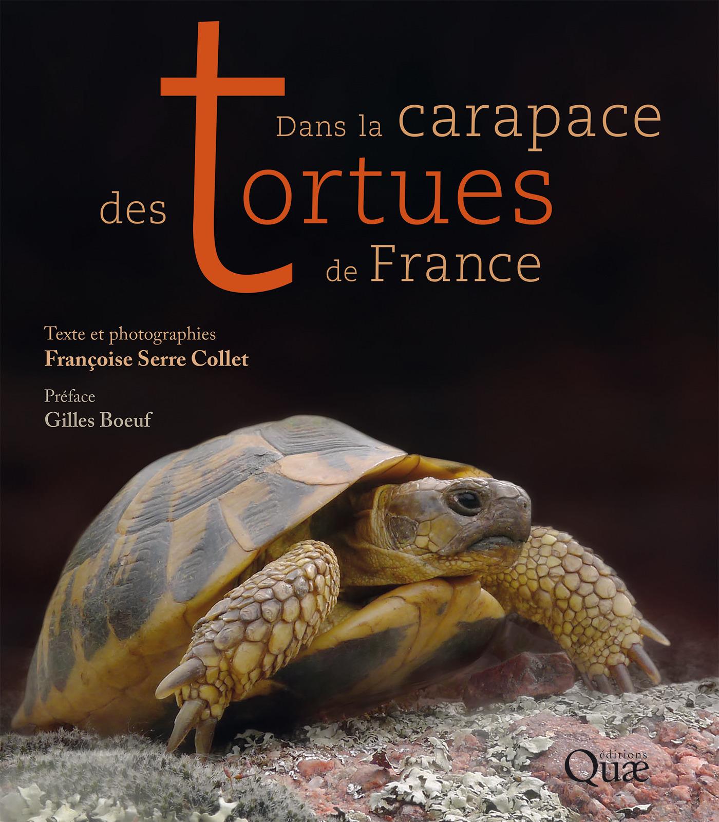 Dans la carapace des tortues de France