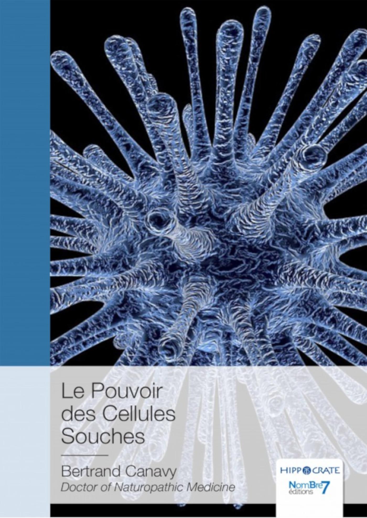 Le pouvoir des cellules souches