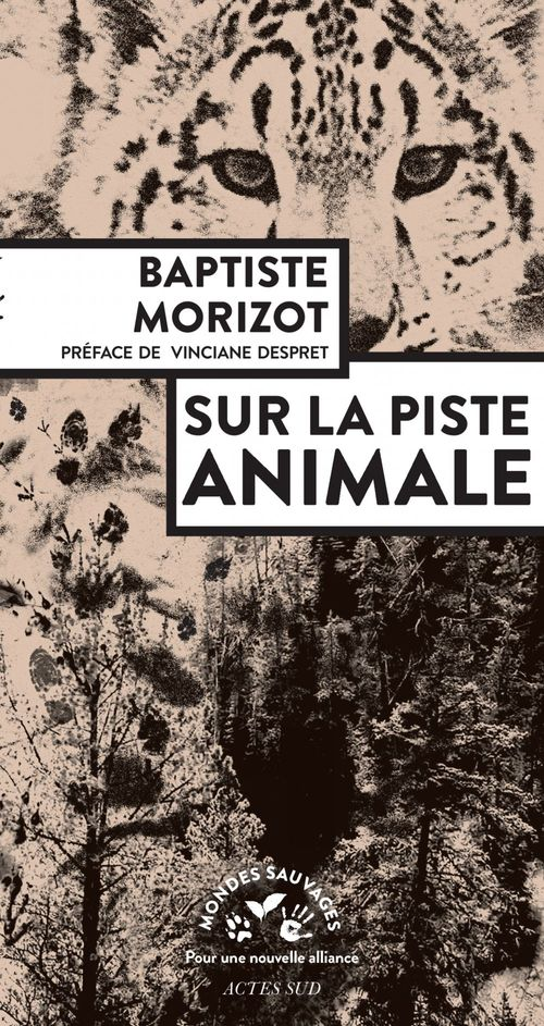 Sur la piste animale
