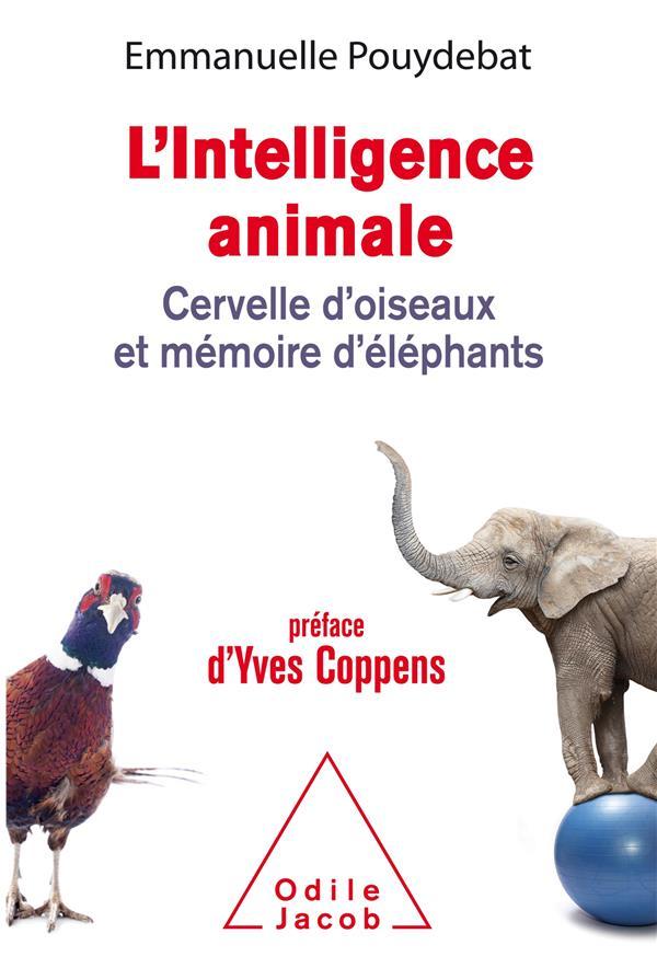 L'intelligence animale ; cervelle d'oiseaux et mémoire d'éléphants