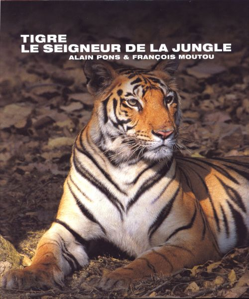 Tigre ; le seigneur de la jungle