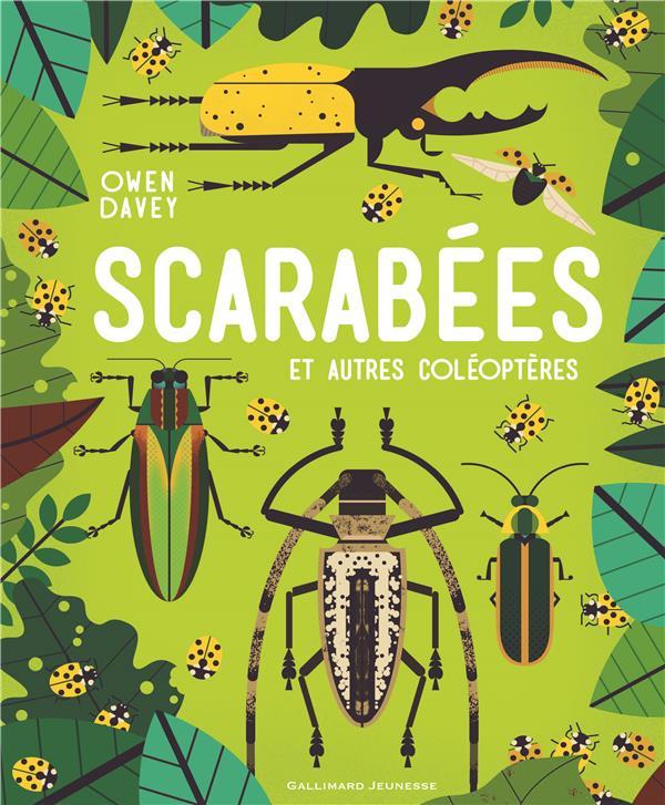 Scarabées et autres coléoptères