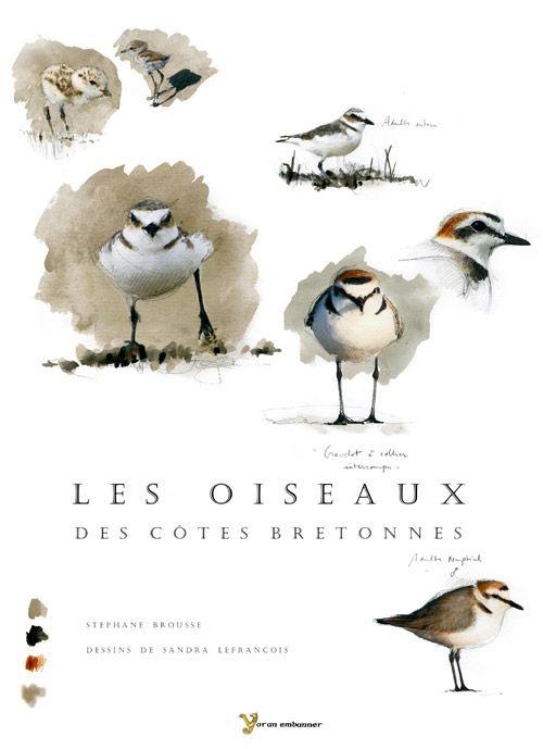 Les oiseaux des côtes bretonnes