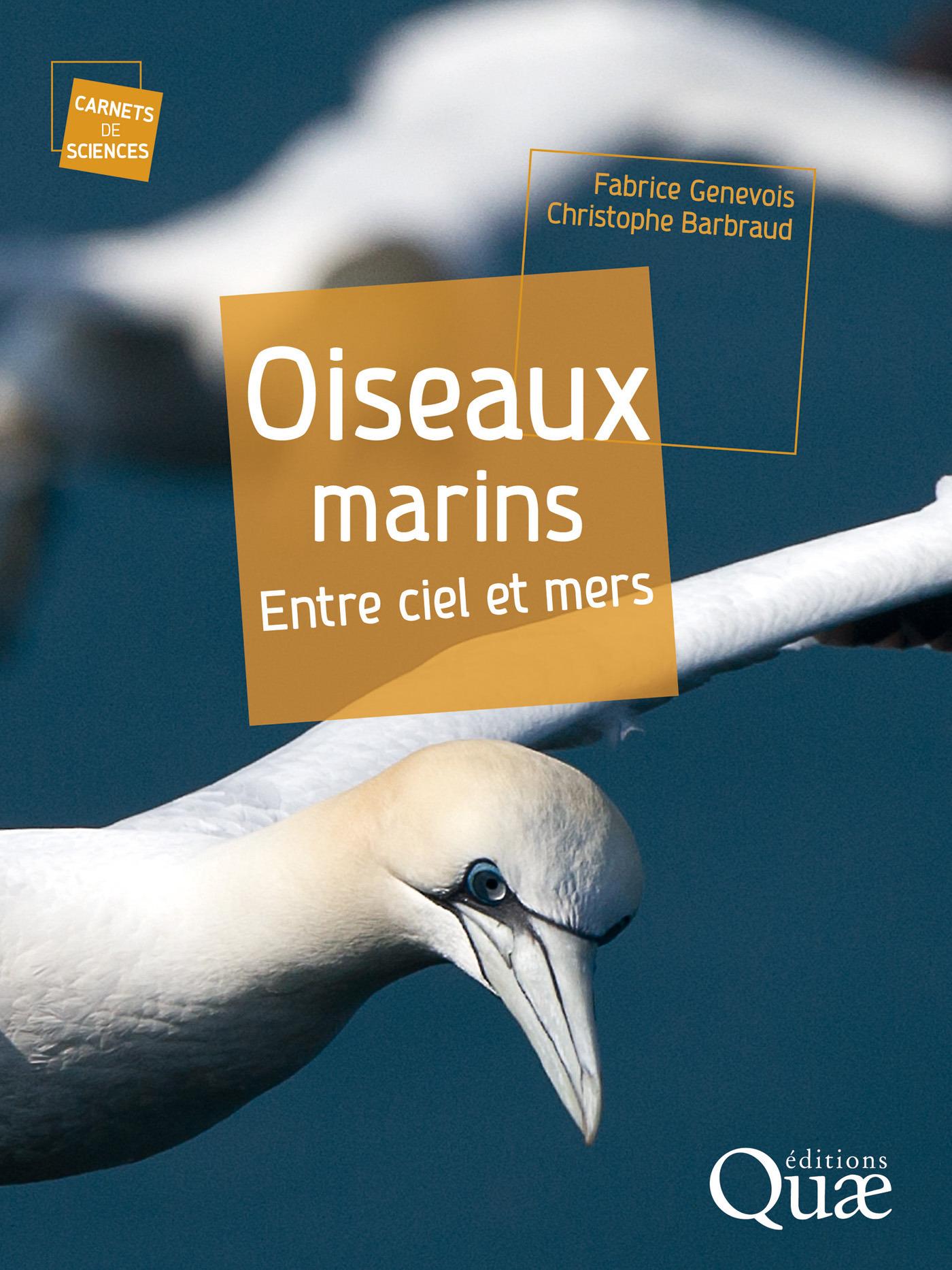 Oiseaux marins ; entre ciel et mers
