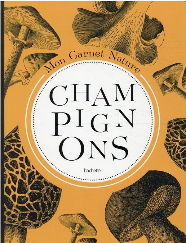 carnet nature : champignons