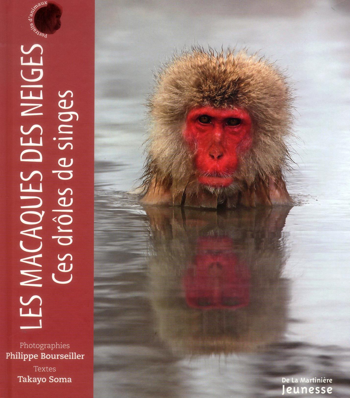 Les macaques des neiges ; ces drôles de singes