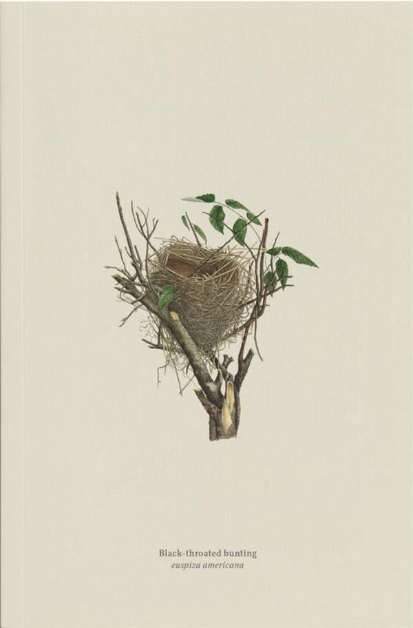 Black-throated bunting, euspiza americ