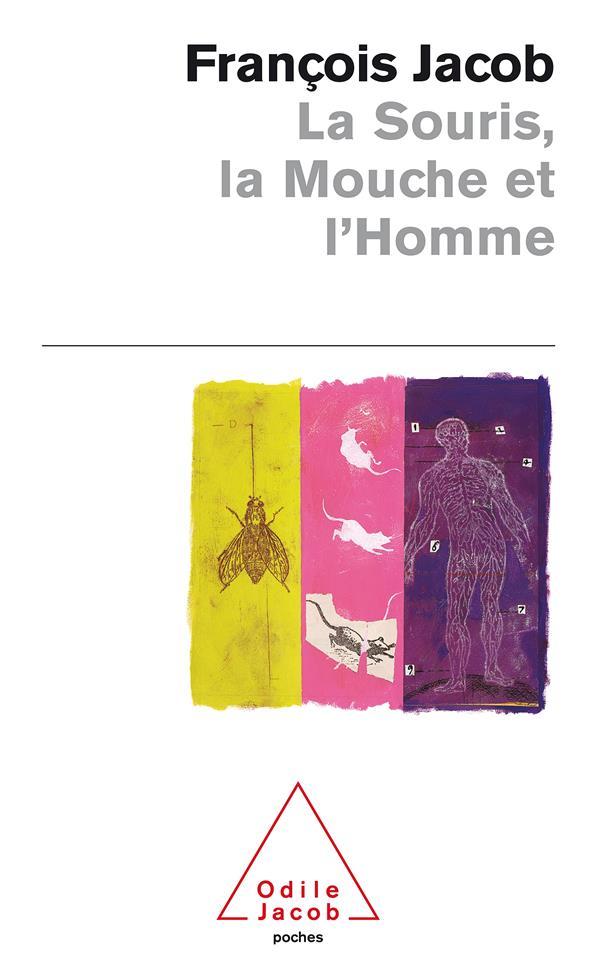 La Souris, La Mouche Et L'Homme