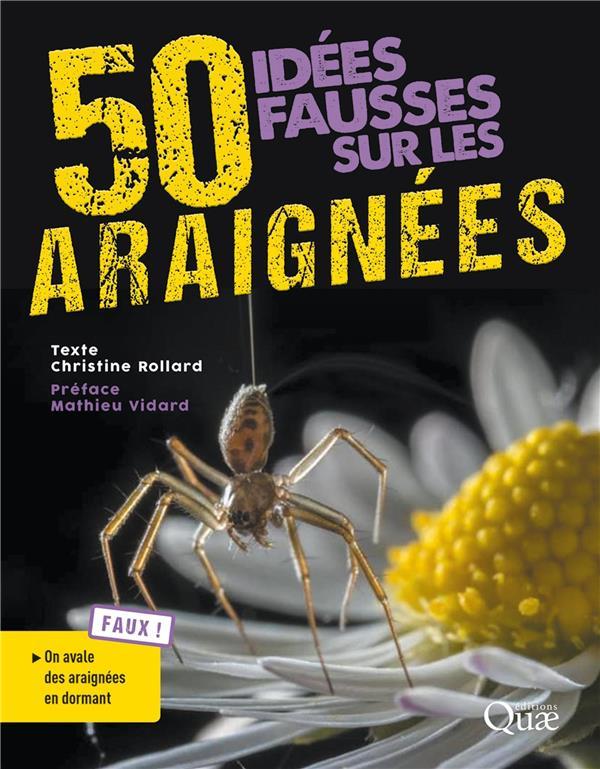 50 idées fausses sur les araignées