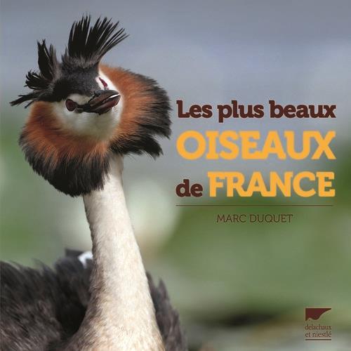 Les plus beaux oiseaux de France