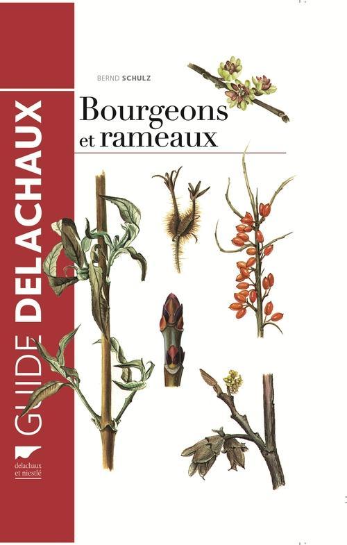 Guide des bourgeons et rameaux