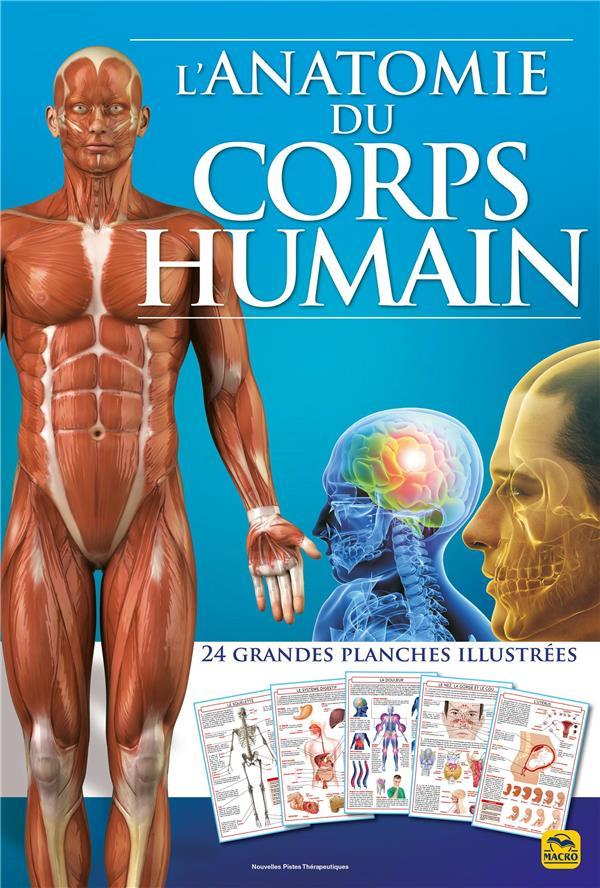 L'anatomie du corps humain ; 24 grandes planches illustrees (2e édition)