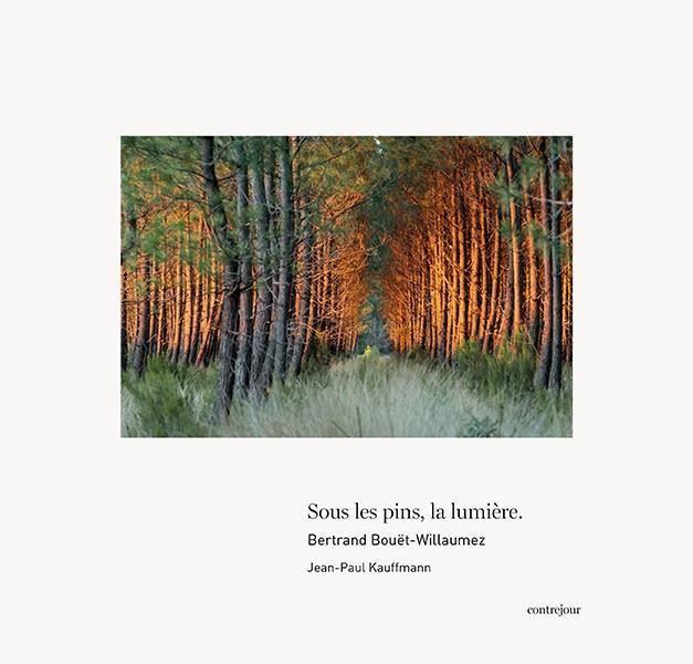 Sous les pins, la lumière