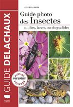 Guide photo des insectes ; adultes, larves ou chrysalides