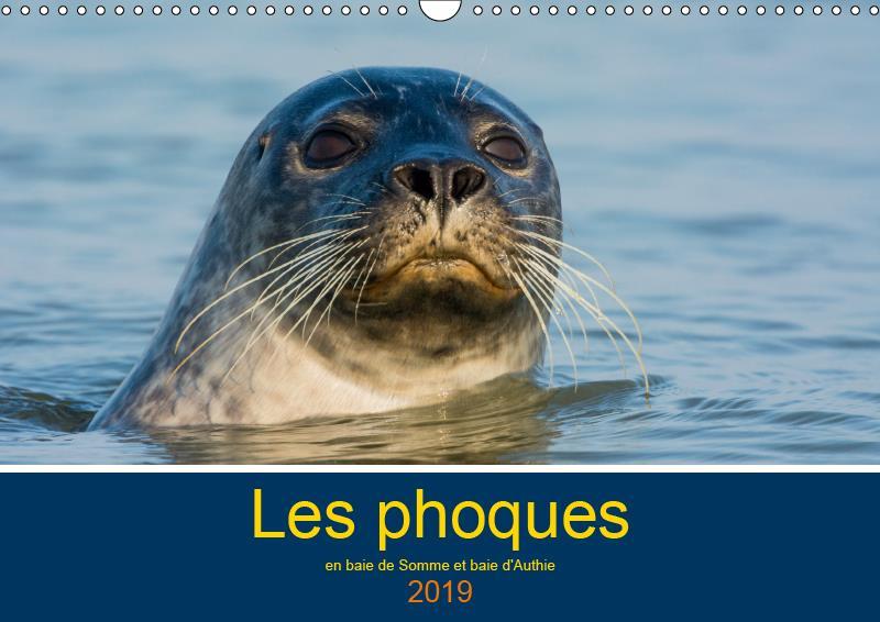 Les phoques en baie de somme et baie d'authie (calendrier mural 2019 din a3 horizontal) - les phoque