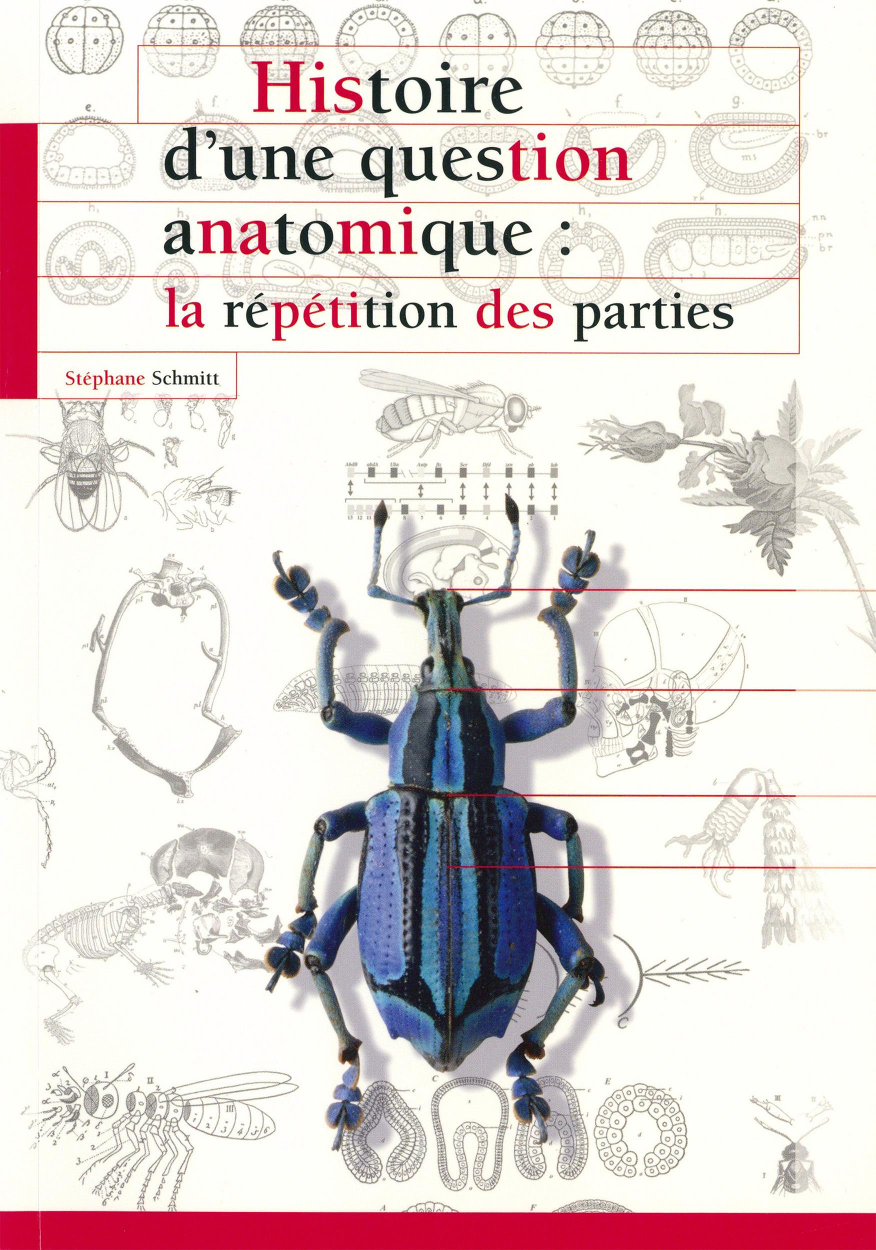 Histoire d´une question anatomique