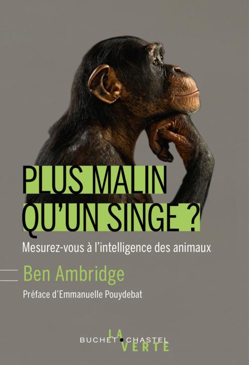 Plus malin qu'un singe ? mesurez-vous à l'intelligence incroyable des animaux