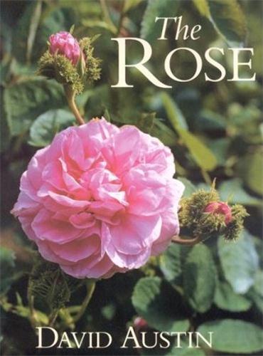 The rose /anglais