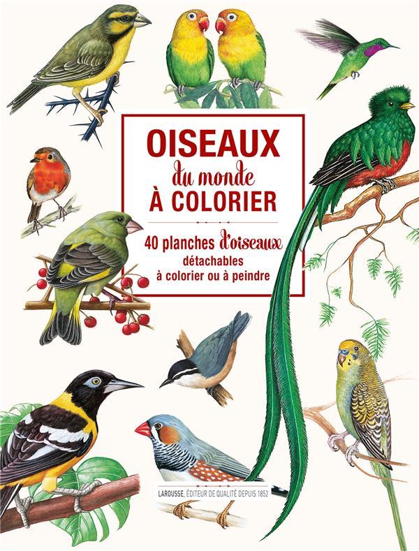 Oiseaux du monde à colorier ; 40 planches d'oiseaux détachables à colorier ou à peindre