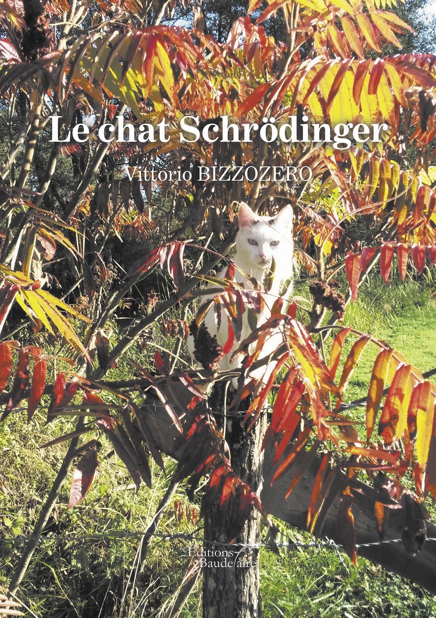 Le chat Schrödinger