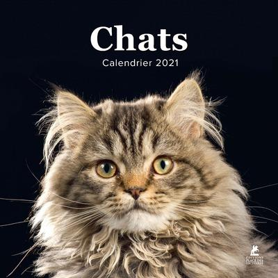 Chats ; calendrier (édition 2021)