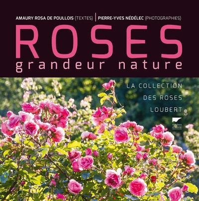 Roses grandeur nature ; la collection des roses Loubert