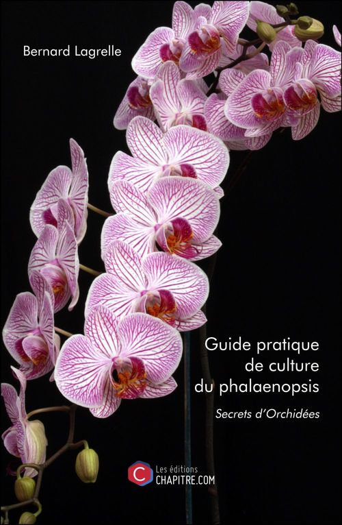 Guide pratique de culture du phalaenopsis