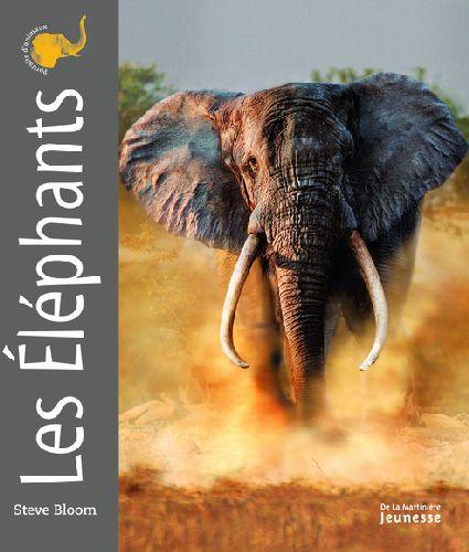 Portraits d'animaux ; les éléphants