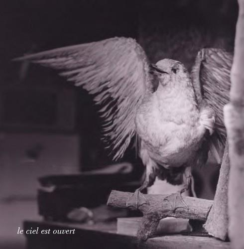 Méchamment les oiseaux