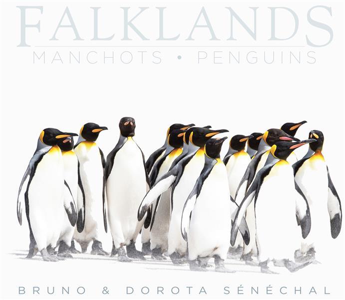 Falklands ; manchots - penguins
