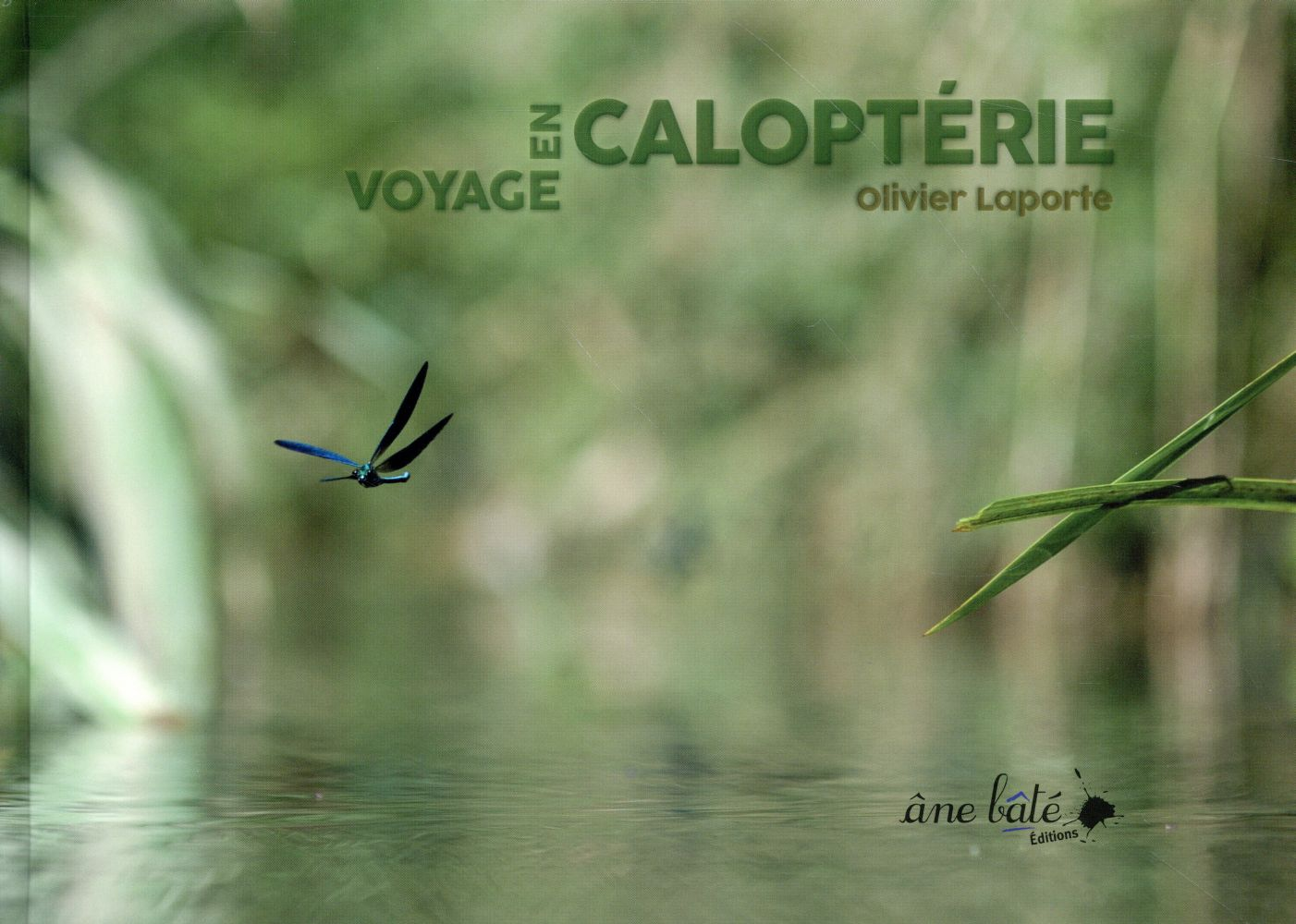 Voyage en Caloptérie