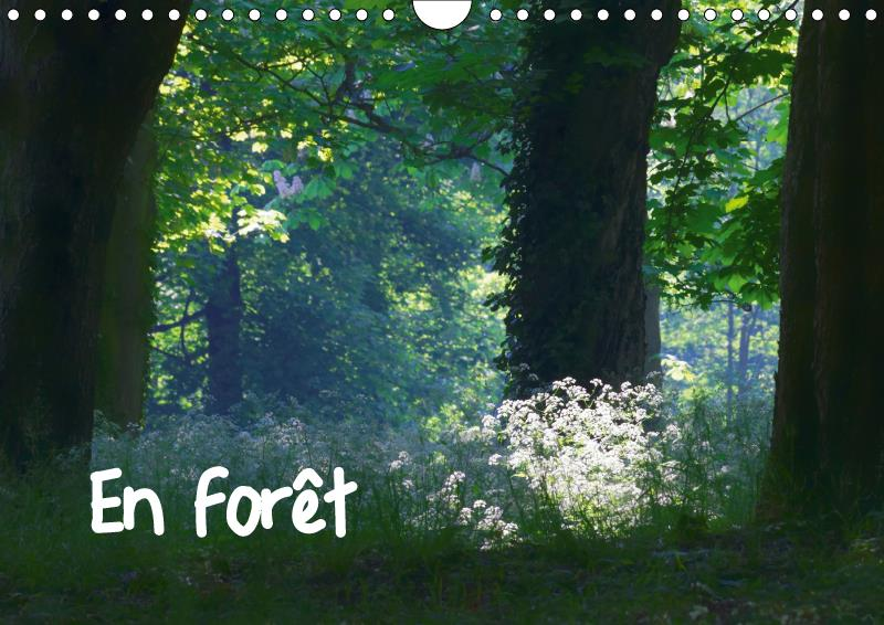 En foret (calendrier mural 2019 din a4 horizontal) - ambiances forestieres (calendrier mensuel, 14 p