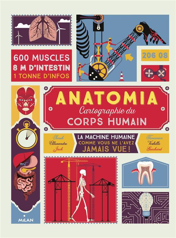 Anatomia ; cartographie du corps humain