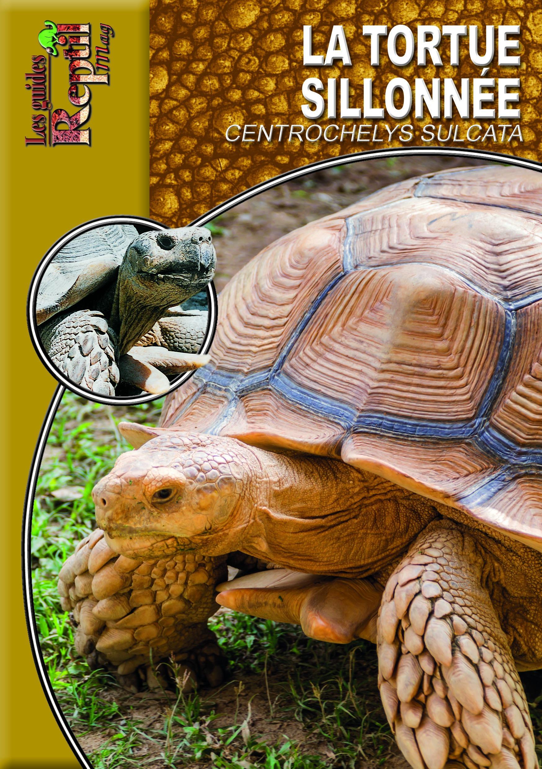 La tortue sillonnée ; centrochelys sulcata