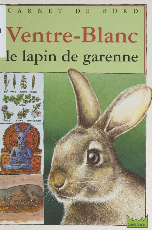 Ventre-Blanc, le lapin de garenne