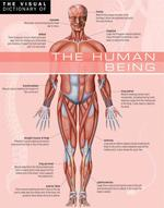 Vente Livre Numérique : The Visual Dictionary of The Human Being  - Ariane Archambault - Jean-Claude Corbeil