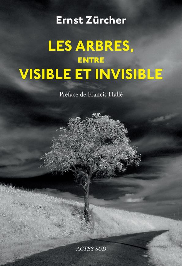 Les arbres, entre visible et invisible ; s'étonner, comprendre, agir