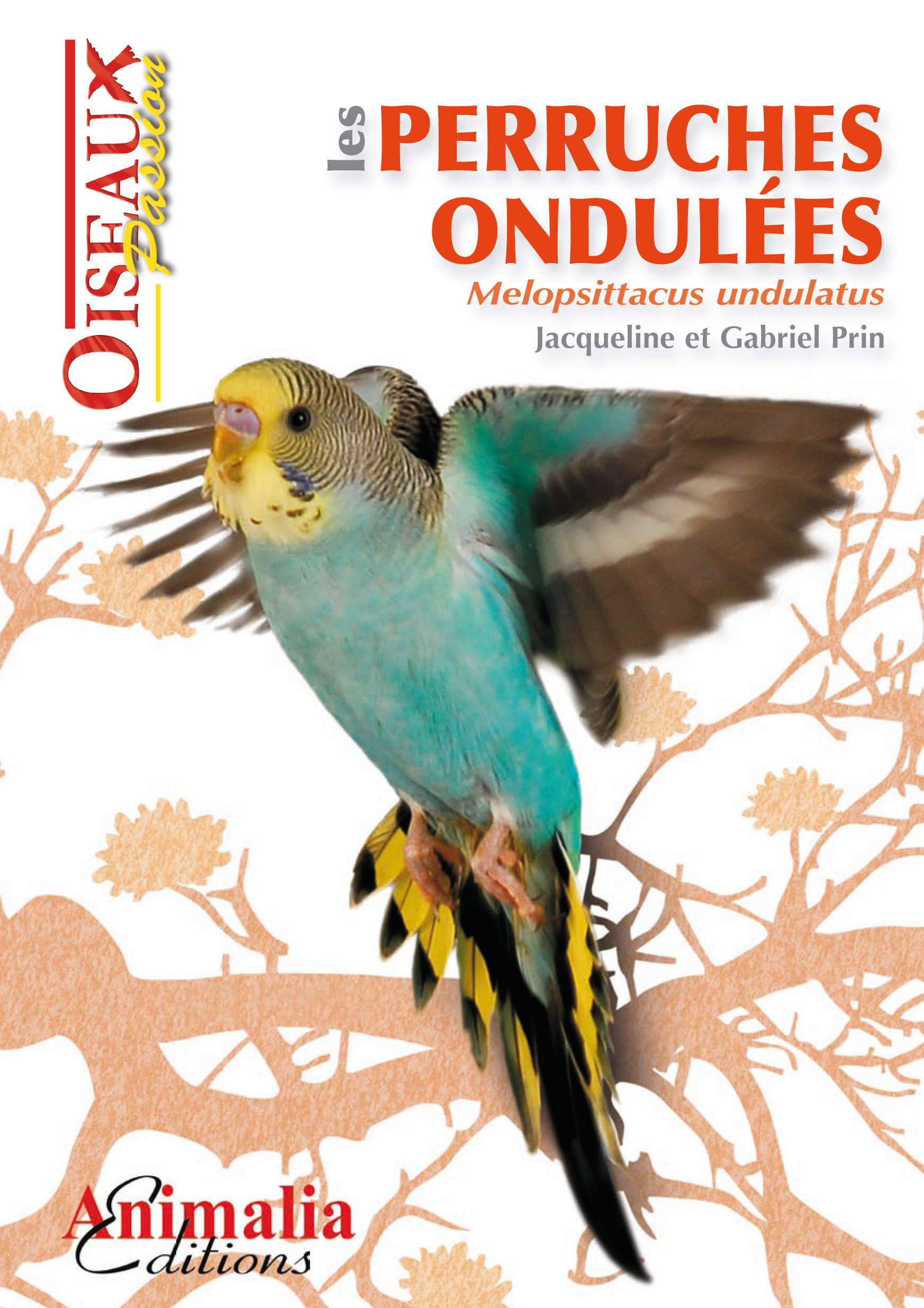 Les perruches ondulées ; Melopsittacus undulatus