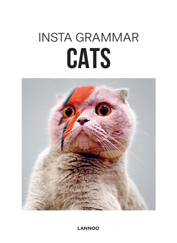 Insta Grammar ; Cats